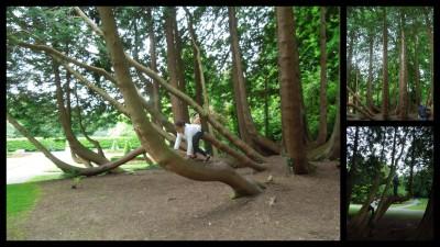 Ashford tree climbing