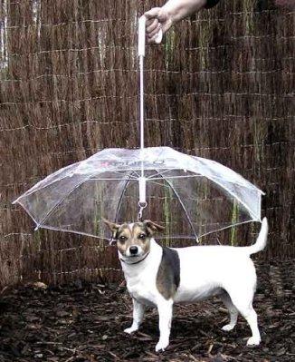 pet-umbrella